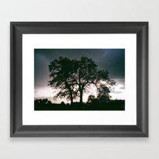 Sequoia Oak Framed Art Print