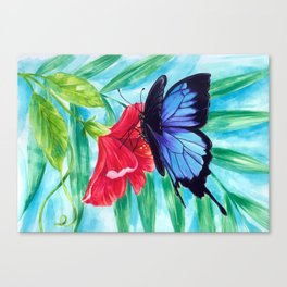 Ulysses Butterfly Canvas Print