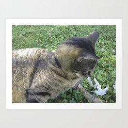 Jasper The Cat Art Print