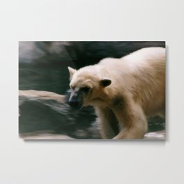Roving bear Metal Print