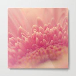 Pink Gerbera Daisy Metal Print