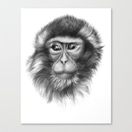 Snow Monkey G2013-069 Canvas Print