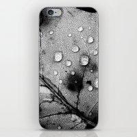 leaf iPhone & iPod Skins featuring leaf by Bonnie Jakobsen-Martin