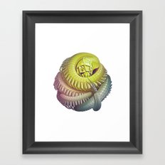 Killipede Framed Art Print