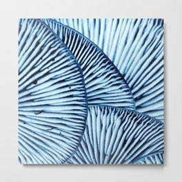 Enoki in Blue Metal Print