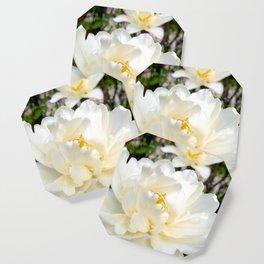 Three double tulips Coaster