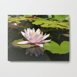 Pink Lily Pad Flower (Reflection) Metal Print