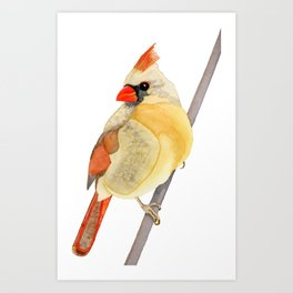 FEMALE CARDINAL - WATERCOLOR PAINTING Art Print