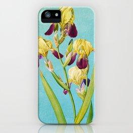 Iris, Iris Squalens, Iris sale, Brown flowered Iris, by Pierre Joseph Redoute, Plate 365 Blue Texture 2 iPhone Case