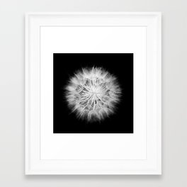 Black and White Dandelion Macro / Nature Photography Framed Art Print