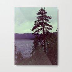 Tree in Tahoe Metal Print
