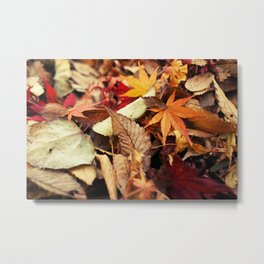 Indian Summer - Colorful Autumn Leaves Metal Print