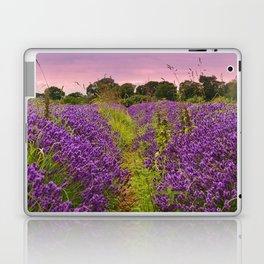 A Norfolk Lavender Field, UK  (Lavandula) Laptop & iPad Skin