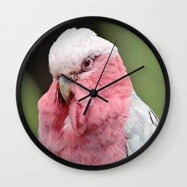 Beautiful Cockatoo Wall Clock