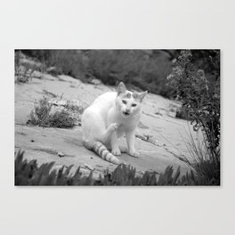 """Cat"" Canvas Print"