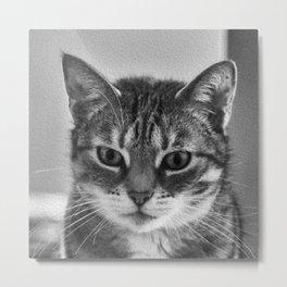 Danger! Beware of the cat! Metal Print