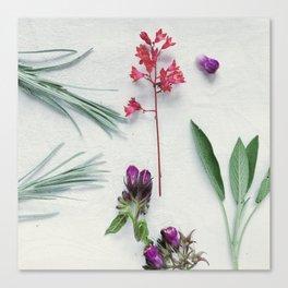 Coral Flower-3 Canvas Print