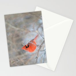 Hanging On (Northern Cardinal) Stationery Cards