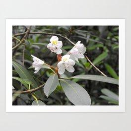 Beautiful State Flower Art Print