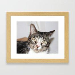 Surprised Kitten face Framed Art Print