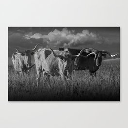Texas Longhorn Steers under a Cloudy Sky in Black & White Canvas Print