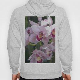 Longwood Gardens Orchid Extravaganza 14 Hoody
