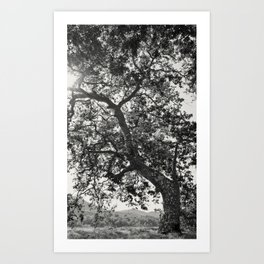Tree Reaching For Light Art Print