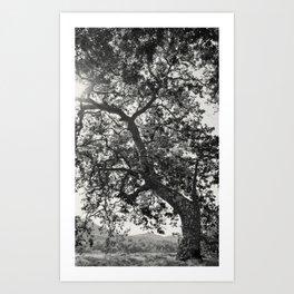 Tree Reaching For Light Art Print