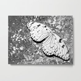 Dead Butterfly Hold Pure Beauty  Metal Print