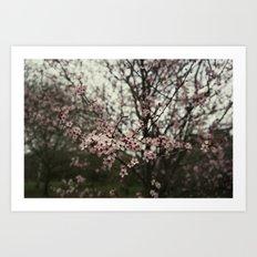 Pink spring blossom Art Print