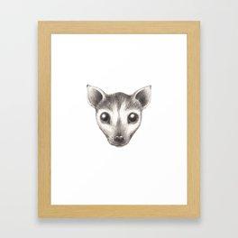 Spectacled Flying Fox Framed Art Print