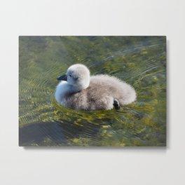 Duckling Metal Print