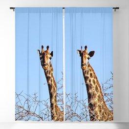 Giraffe in the Wild Savanna Kruger national park, South Africa Blackout Curtain