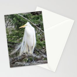 GREAT WHITE EGRET (1 OF 4) - LOOKING LEFT Stationery Cards