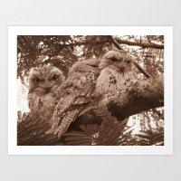 frogmouth owls Art Print