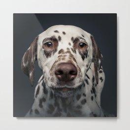 Dalmatian dog Lotte Portrait squared Metal Print