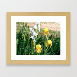 The Amazing Iris #2 Framed Art Print