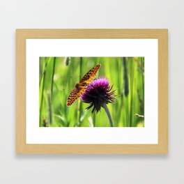 Great Spangled Fritillary Framed Art Print