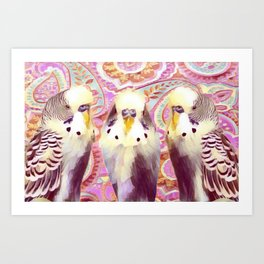 3 Paisley Budgies Art Print