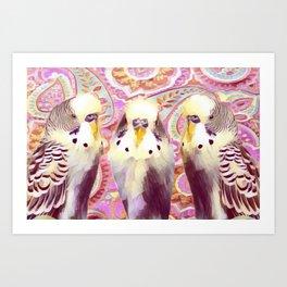 3 Paisley Budgies Art Print