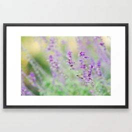 Mexican Sage Framed Art Print