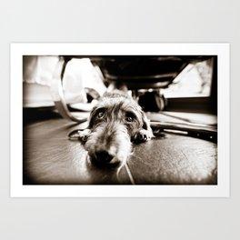 DACKEL DOG #19 Art Print