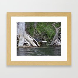 Peek a boo Gator Framed Art Print