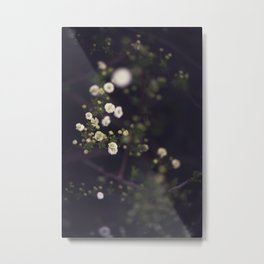 Spring Beauty! Metal Print
