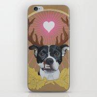 pitbull iPhone & iPod Skins featuring Jaggermeister - pitbull by PaperTigress