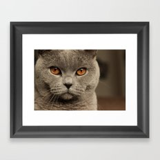 Diesel, the cat - (close up)  Framed Art Print