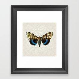 Victorian butterfly Framed Art Print