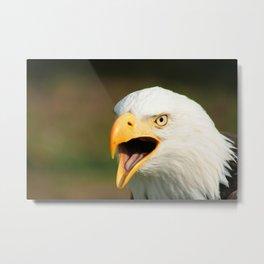 Chirping Bald Eagle Metal Print