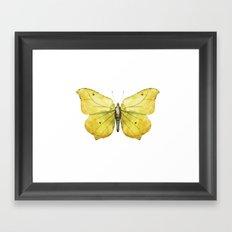 Butterfly 06 Framed Art Print