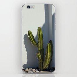Cactus Wall iPhone Skin